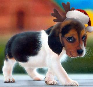 Cute Christmas Puppy